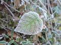 Green leaf in frost Royalty Free Stock Photo