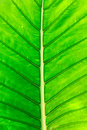 Green leaf on a gleam Royalty Free Stock Photo