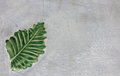 Green leaf on the gray concrete texture background. Space for ideas. Royalty Free Stock Photo