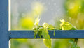 Green leaf on the l fence steel with nature background soft focus Royalty Free Stock Photo