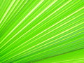 Green leaf looks bright active Royalty Free Stock Image