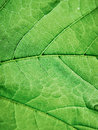 Green leaf macro a photo Royalty Free Stock Photos