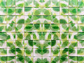 Green leaf mosaic tiles for bathroom design Stock Photo