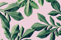green leaf pattern on pink Royalty Free Stock Photo
