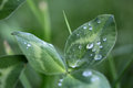 Green Leaf Plant With Drops Of...