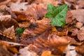 A Green Leaf Poking Through A ...