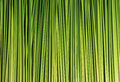 Green leaf of sedge for basketwork and background Stock Images