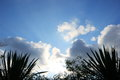 Green leaf silhouette on cloud sky sun ray Royalty Free Stock Photo