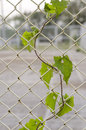 Green leaf on steel wire mesh fence Stock Photography