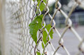 Green leaf on steel wire mesh fence soft focus Royalty Free Stock Photo