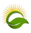 Green leaf sun rays vector logo