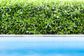 Green leaf with  swimming pool Royalty Free Stock Photo