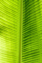 Green leaf texture Royalty Free Stock Photos