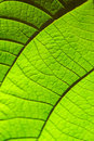 Green leaf texture for background pattern of leaves selective focus natural Stock Photos
