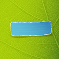 Green leaf texture and blue torn label Stock Photo
