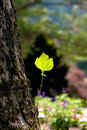 Green leaf on a tree trunk Stock Image