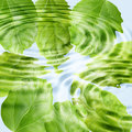 Green leaf under blue water Royalty Free Stock Photography