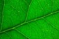 Green leaf vibrant macro closeup Stock Image