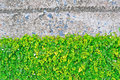 Green leaf wall with concrete Stock Photos
