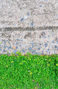 Green leaf wall with concrete Stock Images