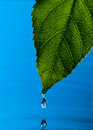 Green Leaf and Water Drop Royalty Free Stock Photography