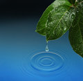 Green leaf with water drop falling blue waves Royalty Free Stock Photo