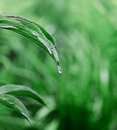 Green leaf with water drop summer background selective focus Royalty Free Stock Photography