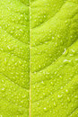 Green leaf with water droplets Royalty Free Stock Images