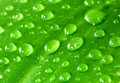 Green leaf with water droplets closeup Stock Photos