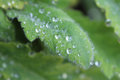 Green leaf with water droplets macro Stock Photos