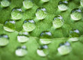 Green leaf with water drops macro shot shallow depth of field Stock Photography