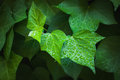 Green leaf with waterdrops Royalty Free Stock Photo