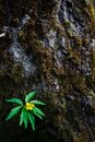 A green leaf with a yellow flower on the background of a tree bark. Royalty Free Stock Photo