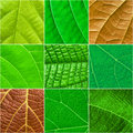 Green Leafs Square Collage - S...