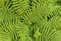 Green leafy background from the forest Stock Images