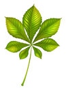 A green leafy plant illustration of on white background Stock Images