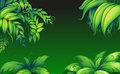 Green leafy plants illustration of the Stock Image