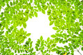 Green leave pattern texture on white background. Copy space Royalty Free Stock Photo