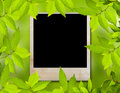 Green leave and photo frame Stock Image