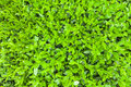 Green leave texture background Royalty Free Stock Photo
