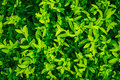 Green leave texture Royalty Free Stock Photo