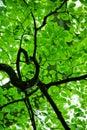 Verde follaje
