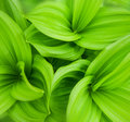 Green leaves abstract background a Royalty Free Stock Photos