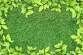 Green leaves on artificial grass Stock Images