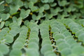 Green Leaves Background Shallow Depth Of Field Royalty Free Stock Photo