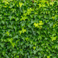 Green leaves background tiny as Stock Photography