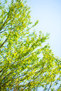 Green leaves and blue sky summer Royalty Free Stock Images