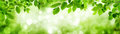 Green leaves and blurred highlights build a frame Royalty Free Stock Photo