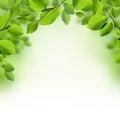 Green leaves border background