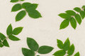 Green leaves with branches on muslin fabric